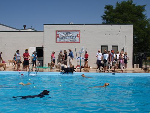 Qu parte de guau no entiendes piscinas para perros pero qu envidia - Piscina para perros rigida ...