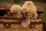 мой фотоблог!