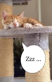 chaton roux et blanc dort sur arbre à chat