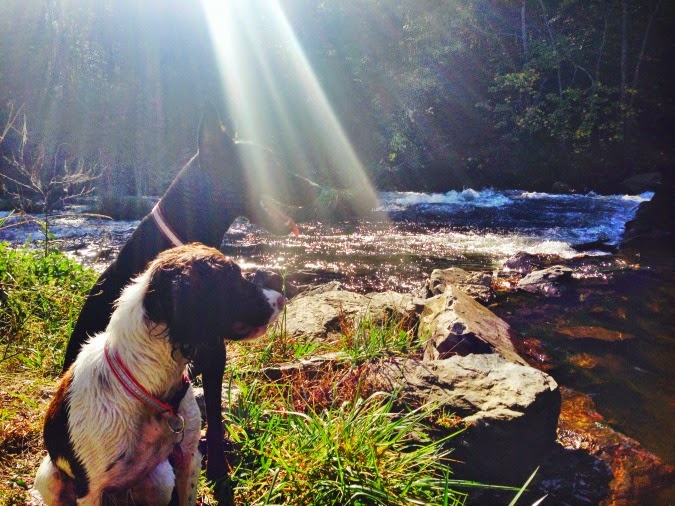 Dogs at Broken bow oklahoma