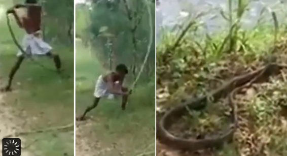 Dad kills cobra with barehands