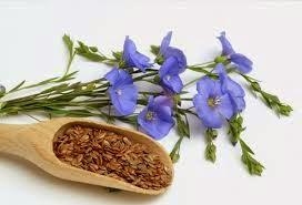 tanaman biji rami untuk kesehatan