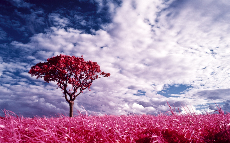 Nature Pink Land Desktop Wallpaper | Pink Wallpaper ...