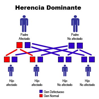 Introduccion de herencia y genetica