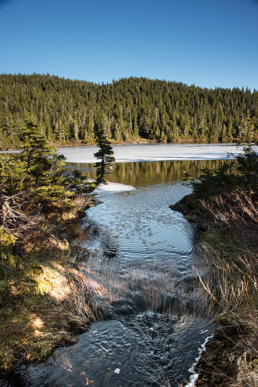 Lake Rosemarie outflow, in the Beaufort Range
