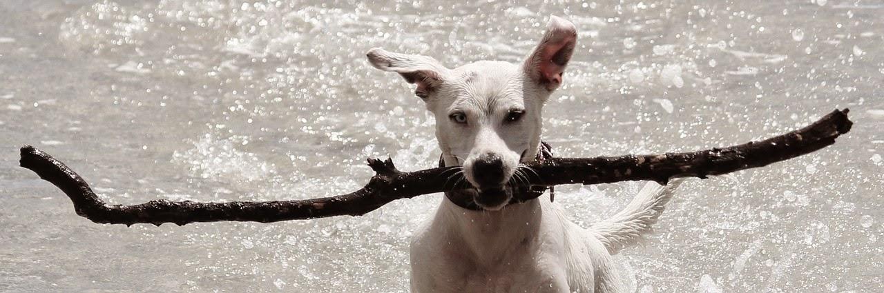 erstaunliche Hundefotos