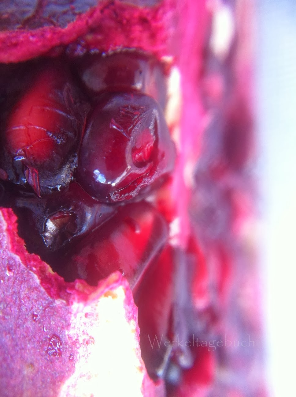 Macro Pomegranate Macrophotography