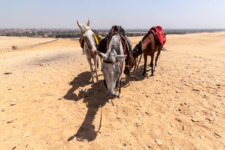 a piramisok közelében Gízában