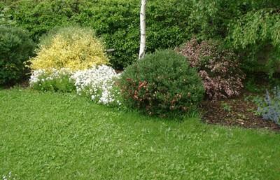 Garden center ejea selecciona los arbustos por su color for Especies de arbustos