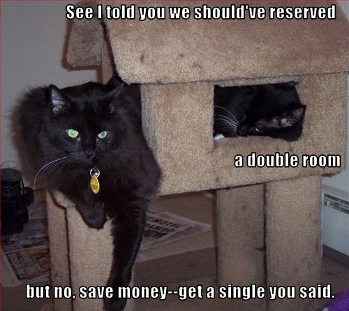 lolcat house