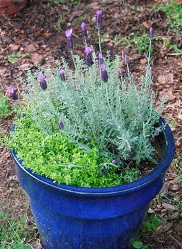 Creating an herb garden