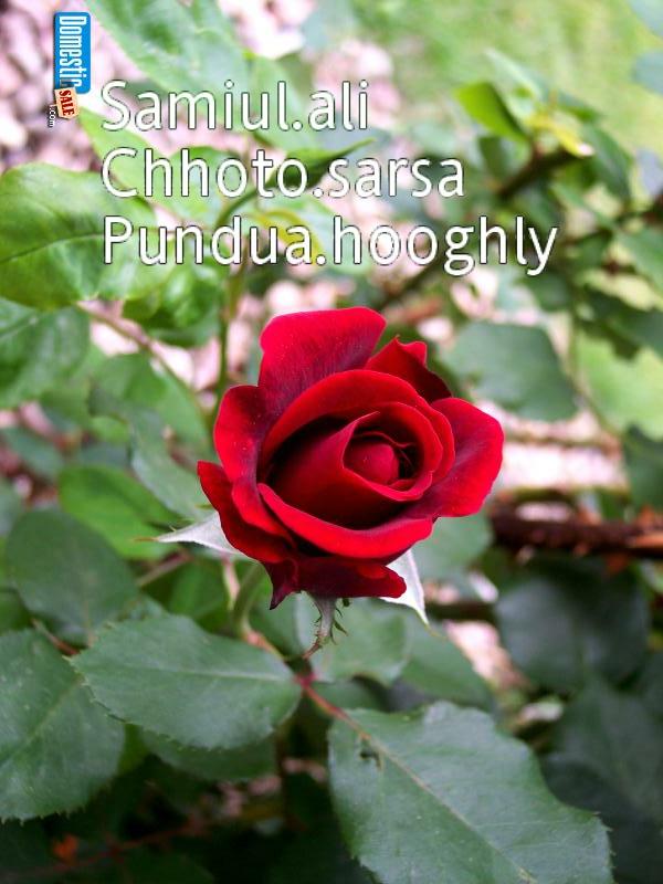 http://1.bp.blogspot.com/-PcsgAIy9JaU/Tw3nunO7eZI/AAAAAAAAAAc/905xnQYXhKQ/s1600/image-upload-16-754018.jpg