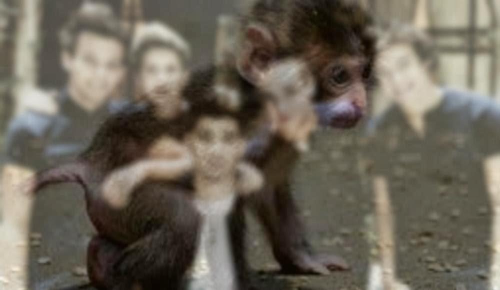 Jestem małpą