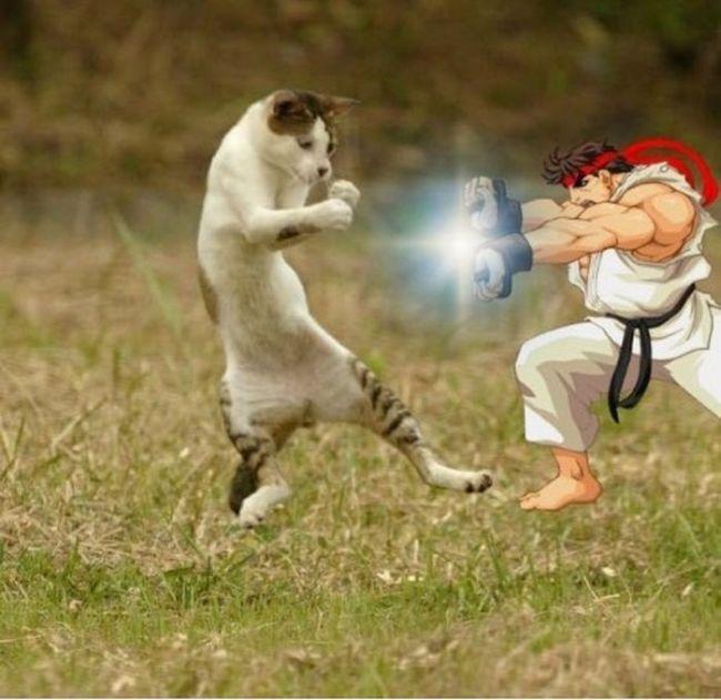 кот дерется