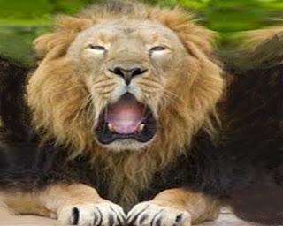 Il leone e la volpe (Esopo)