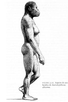 antepasados del hombre Australopithecus africanus