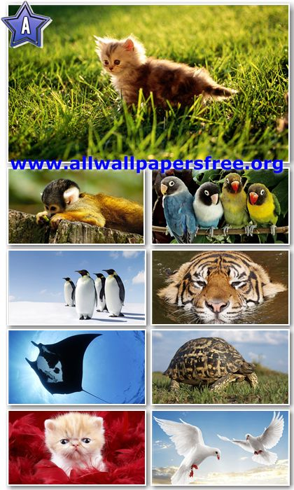 40 Stunning Animals HD Wallpapers 1366 X 768 [Set 13]