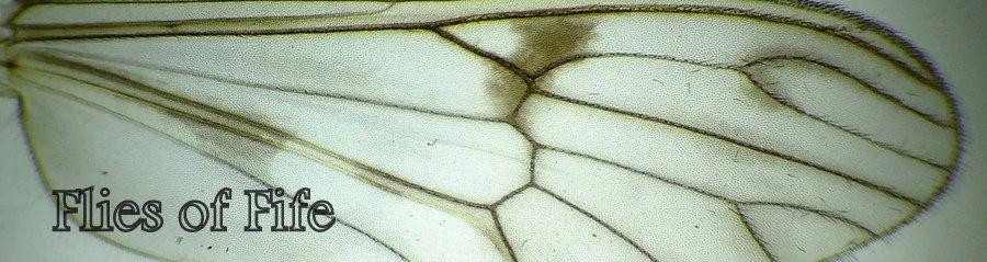 Flies of Fife