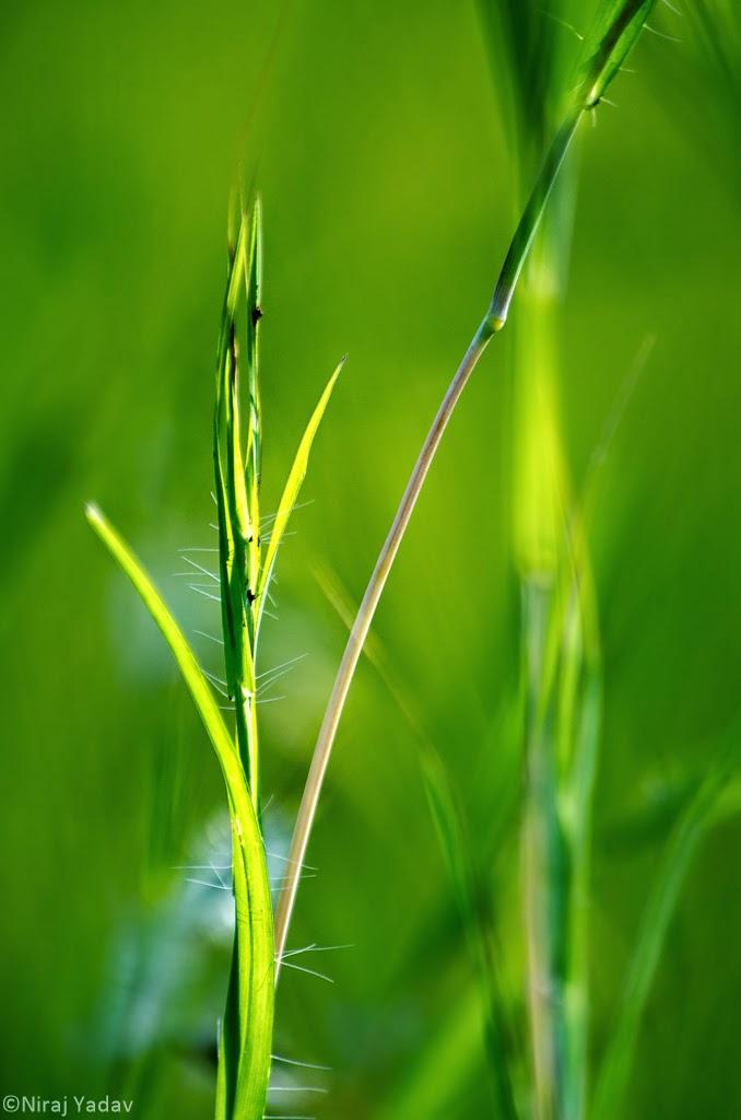 plant macro in konkan, budgetyatri