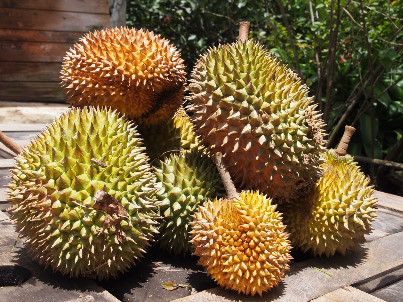 durian in puerto rico. Black Bedroom Furniture Sets. Home Design Ideas