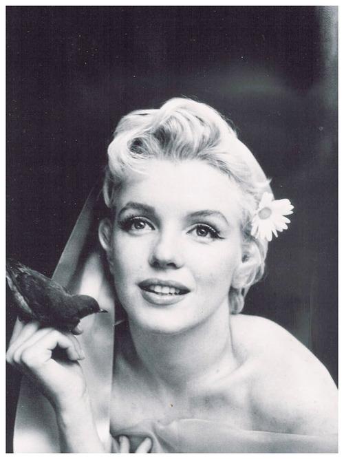 Beauty - Marilyn