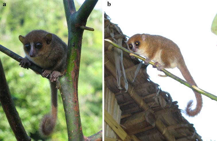 vertebrate zoology by kotpal pdf