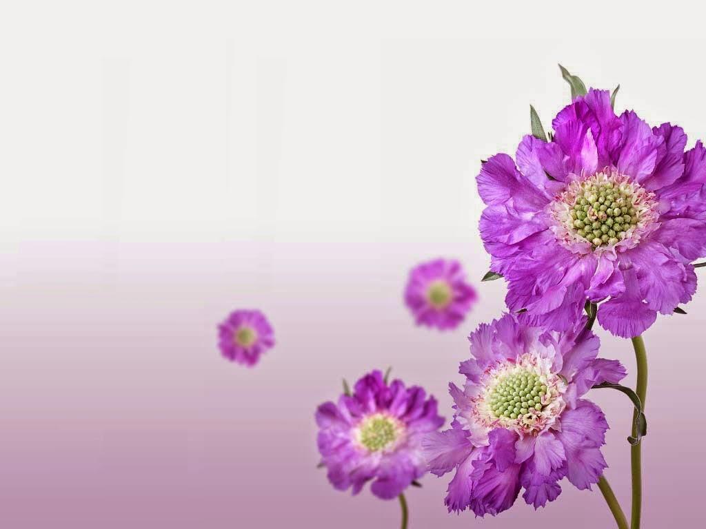 Bangla HD Wallpaper Image