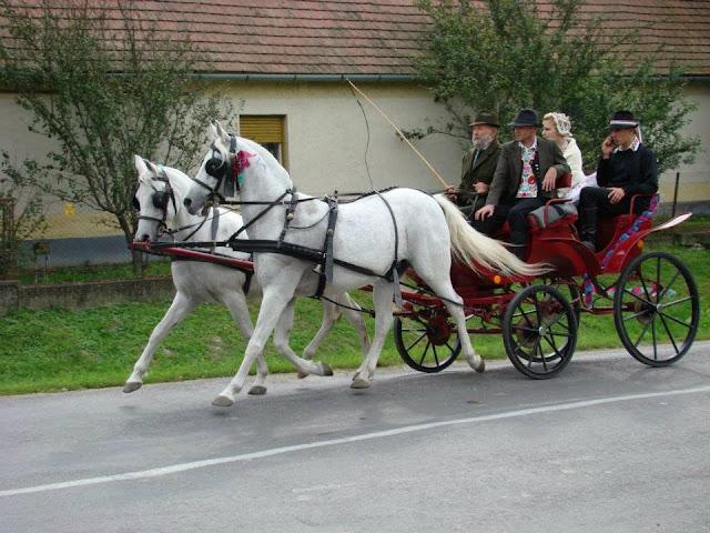 Угорське весілля на конях