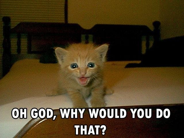 Exxeme tu lis pas tes mps  Cat-cats-kitten-kitty-pic-picture-funny-lolcat-cute-fun-lovely-photo-images-oh-god-why-would-you-do-that