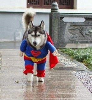 dog great Superman Outfit illusion dress for pets