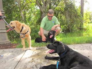 Coach is lying down in the foreground.  Liz, a black lab, is lying down with puppy raiser Brian behind her and golden retriever Gail is off to the left.