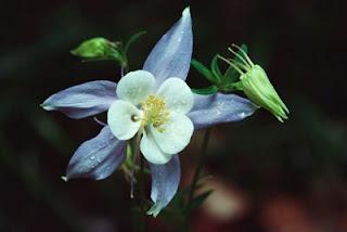 Shade Perennial Flowers