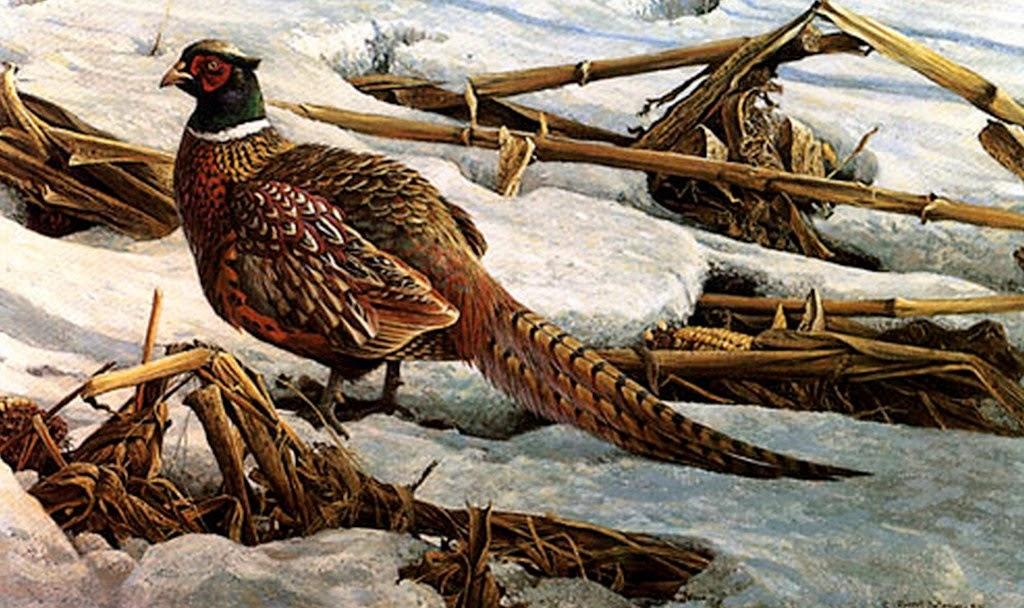 paisajes-naturales-con-aves-pintados-en-realismo