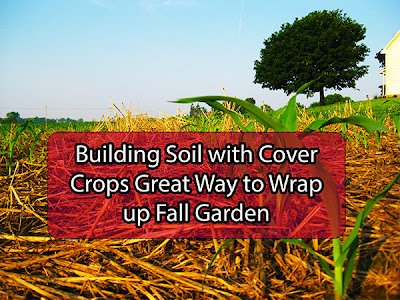 Building soil with cover crops great way to wrap up fall garden