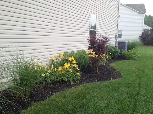 Landscaping On Side Of House : My life by design landscaping update the side yard