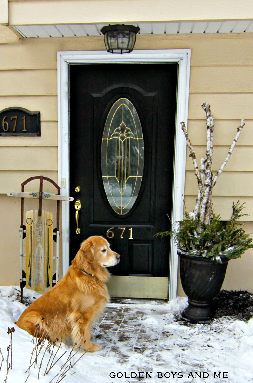 Golden Retriever in snow-www.goldenboysandme.com