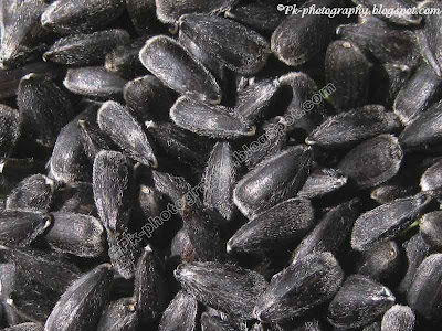 Sunflower Seeds Picture