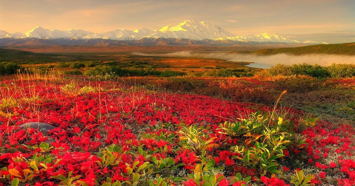 Red Rose Flower Garden Wallpaperhttprefreshrose