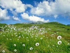 Mimpi Padang Rumput