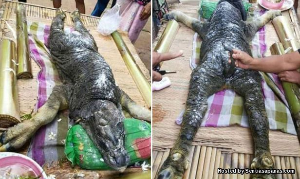 Weird crocodile and buffalo-like in Thailand