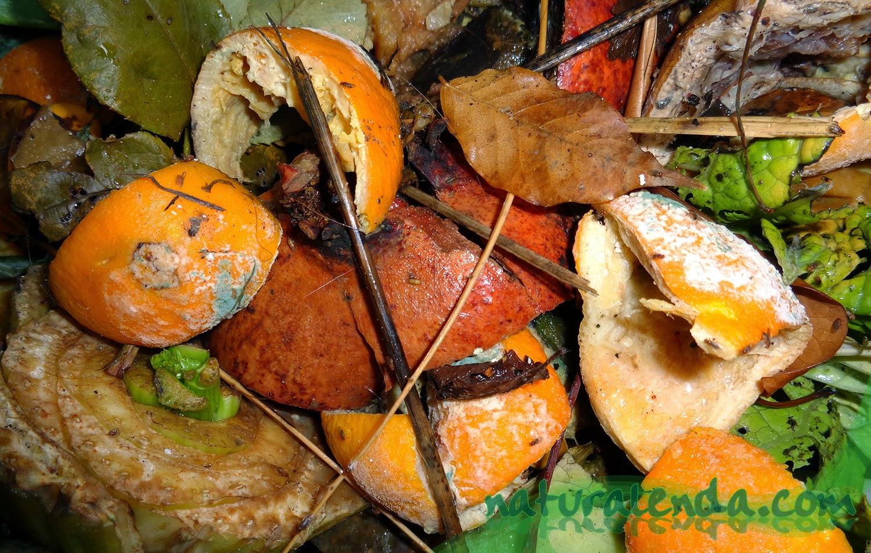 restos de naranjas en el vermicompostador
