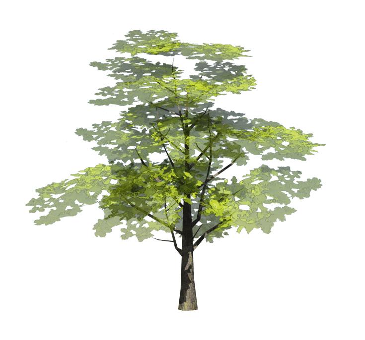 IMP for presentation Trees Landscape II IMP