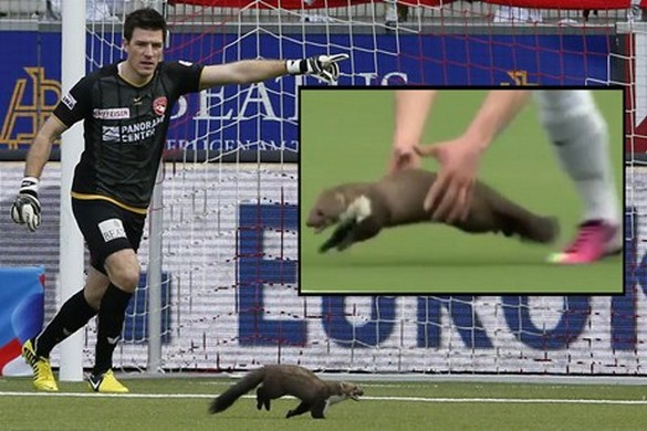 Swiss soccer team got trolled by a Weasel