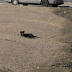 A rescue team tries to catch a stray dog but found a surprising discovery