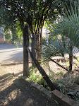 em um canto da rua, na esquina, na sombra junto ao poste velho