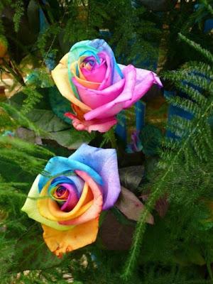 12 'قوس قزح' من أجمل الزهور التي قد تراها   حقن الزهور بصبغات مختلفة