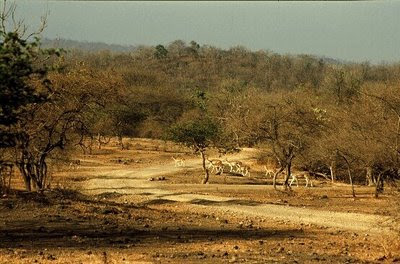 Gir national park closed for tourists this monsoon