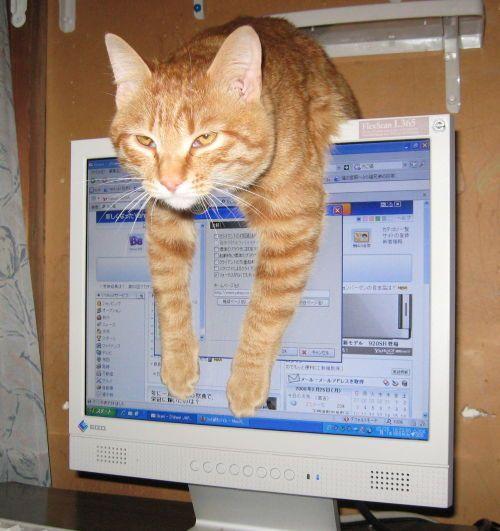 Fotos graciosas y divertidas de gatos grandes y pequeños