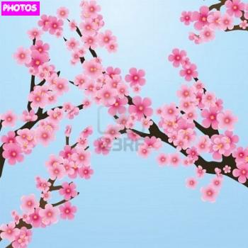 cherry blossom tree drawing cherry blossom tree. Black Bedroom Furniture Sets. Home Design Ideas