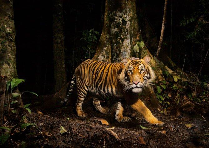 Buscando el norte mi rinc n para evadirme misi n - Show me a picture of the tiger ...